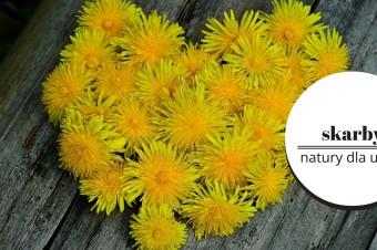 Mniszek lekarski- sposób na majowy detox